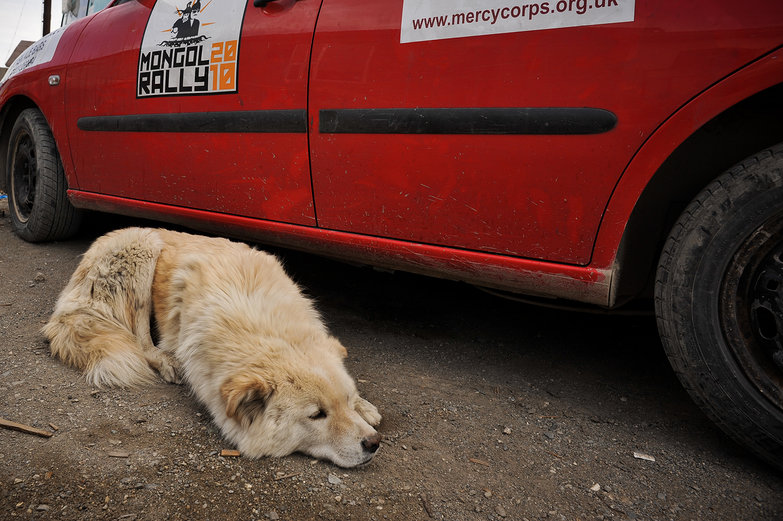 Dog in Mongol Rally Graveyard