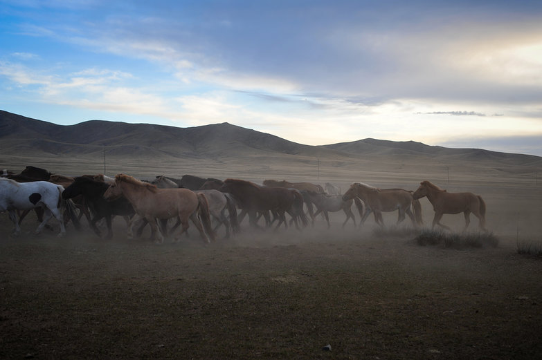 Mongolian Horse Herd