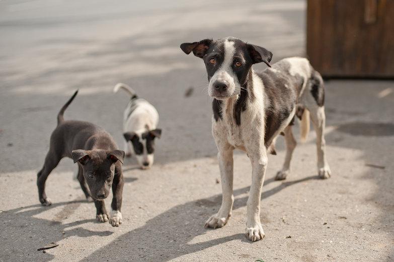 Mama & Puppies