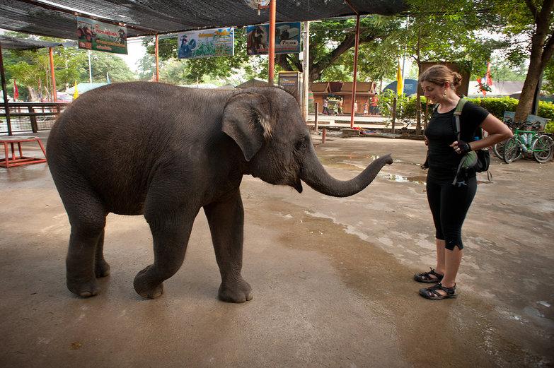 Tara & Baby Elephant