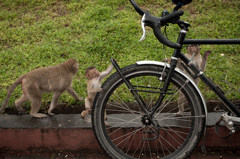 Monkeys on Tyler's Bike!