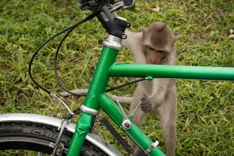 Monkey Shifting Gears