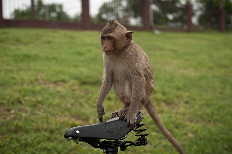Monkey on Tara's Brooks Saddle