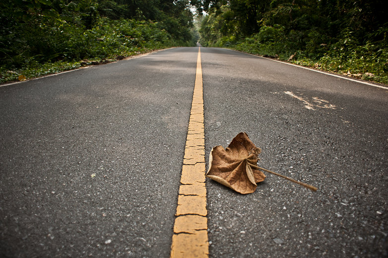 Leaf on the Road to Khao Yai National Park