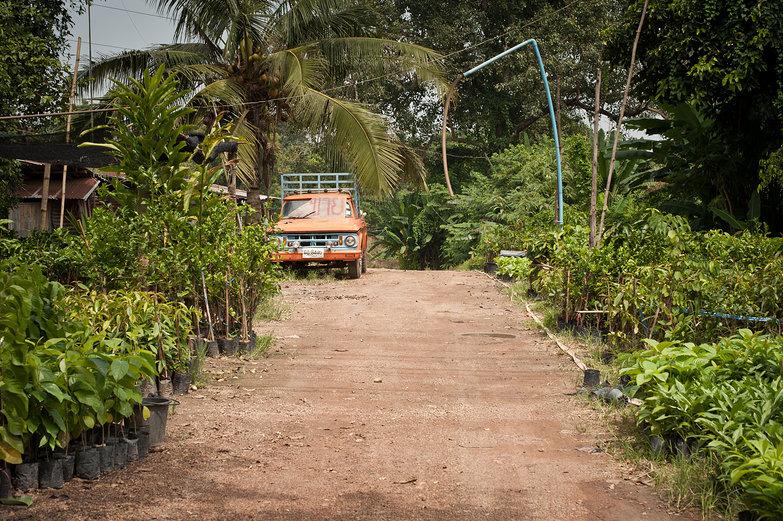Thai Plant Nursery