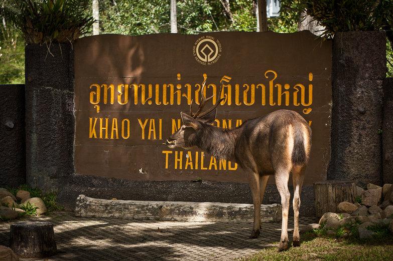 Khao Yai National Park Deer