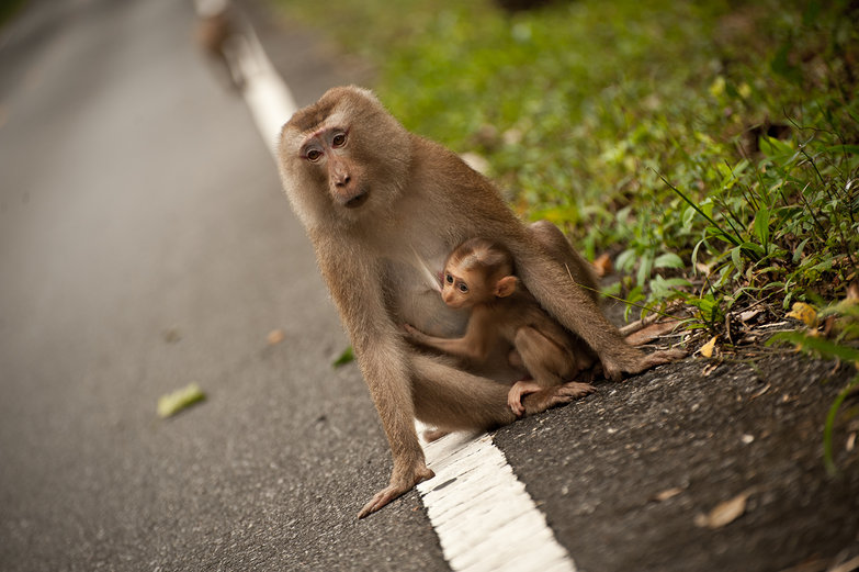 Mama and Baby Monkey