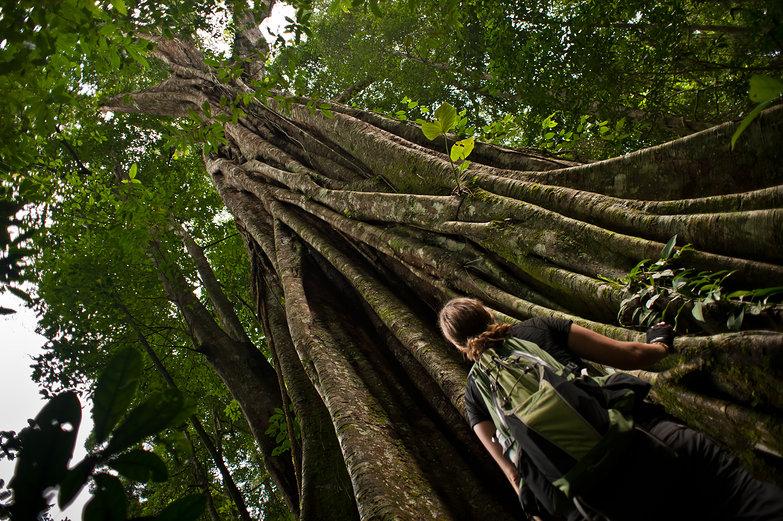 Tara & Huge Jungle Tree