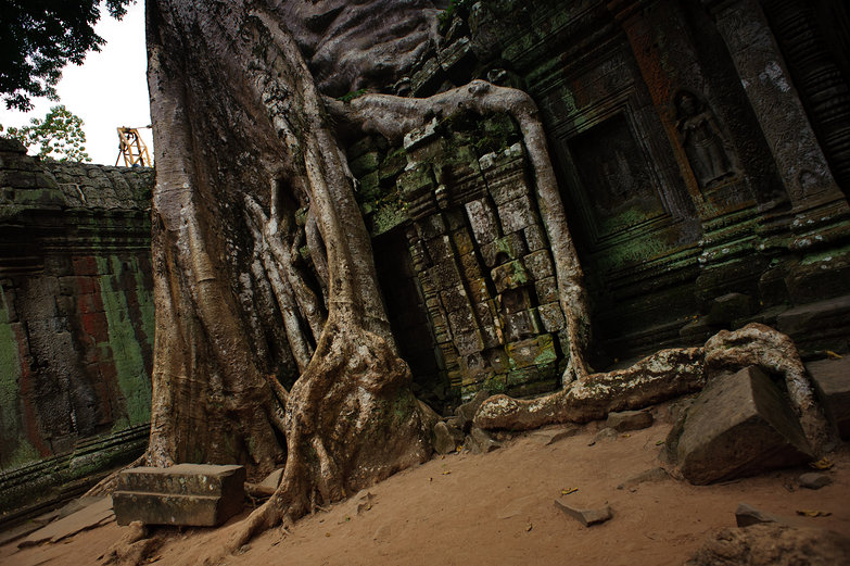 Angkor Thom Tree Roots