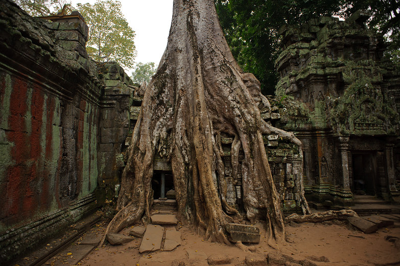 Ta Prohm Temple & Crazy Tree Roots