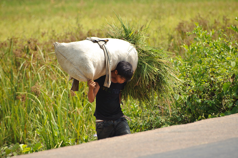 Grass-Carrying Cambodian Man