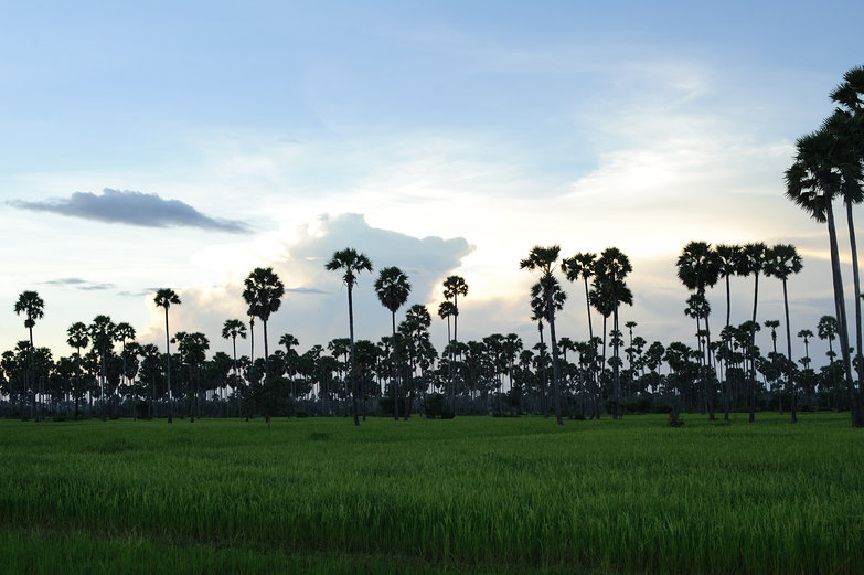 Cambodian Evening Landscape
