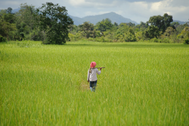 Cambodian in Field