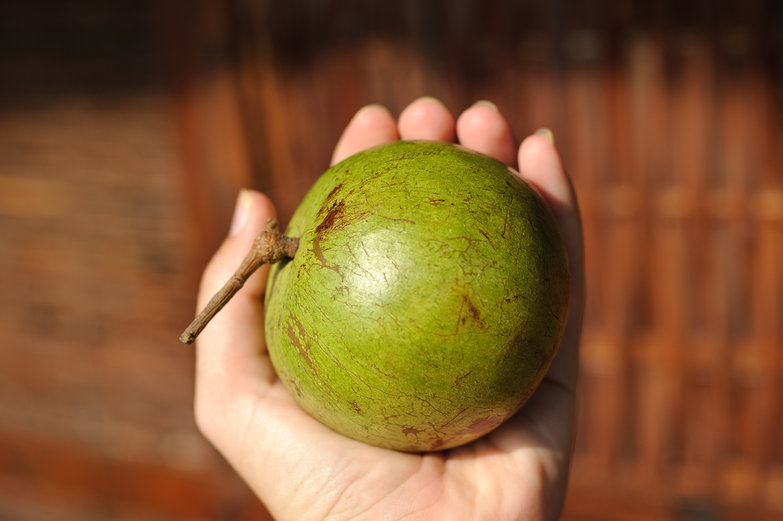 Star Apple