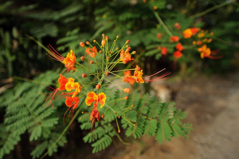 Vietnamese Flower