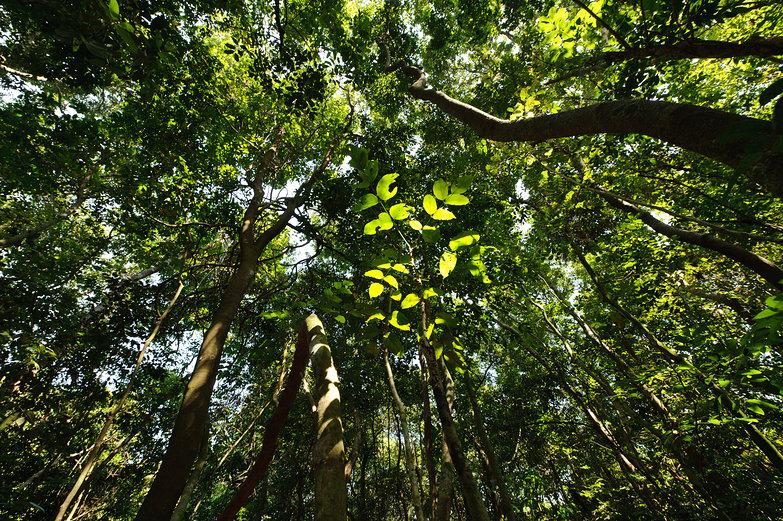 Cu Chi Trees