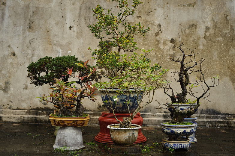 Huế Imperial City Plants