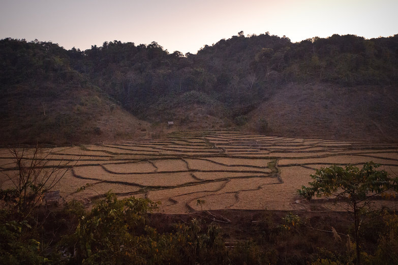 Lao Fields at Dusk