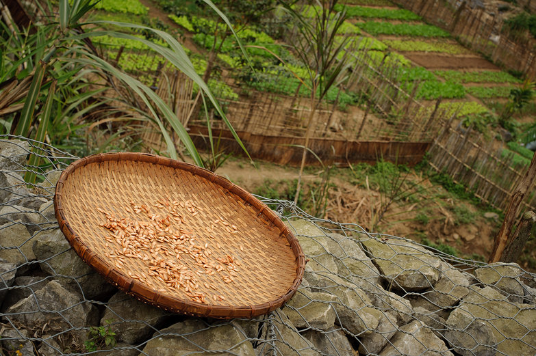 Lao Pumpkin Seeds Drying?