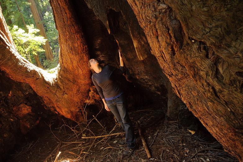 Tara & Redwood at Muir Woods