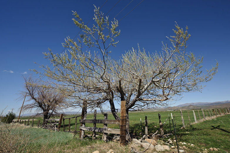 Nevada Trees & Fields