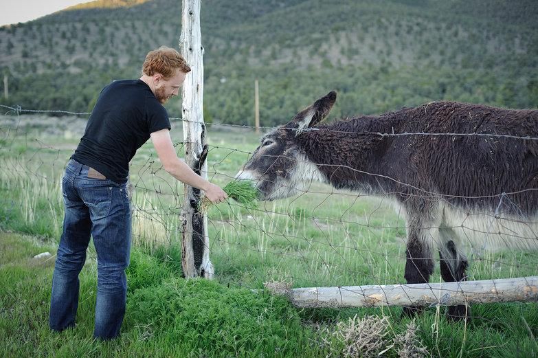 Tyler Feeding Donkey