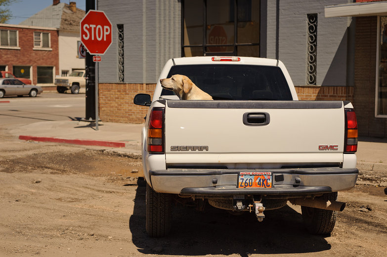 Dog in the Back of a Pickup Truck