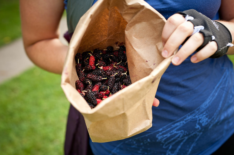 Bag of Mulberries