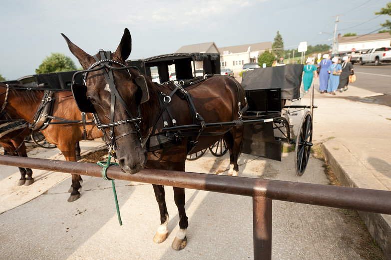 Amish Horses & Buggies