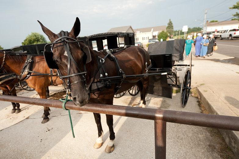 Amish Horses & Buggies