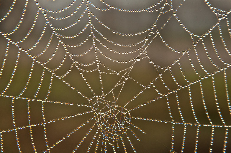 Dewy Morning Spider Web