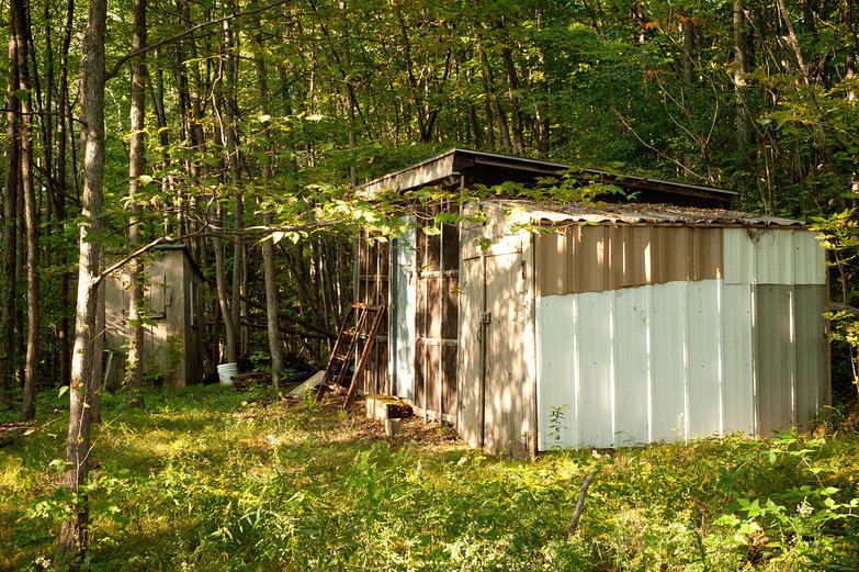 Storage Shed in the Woods