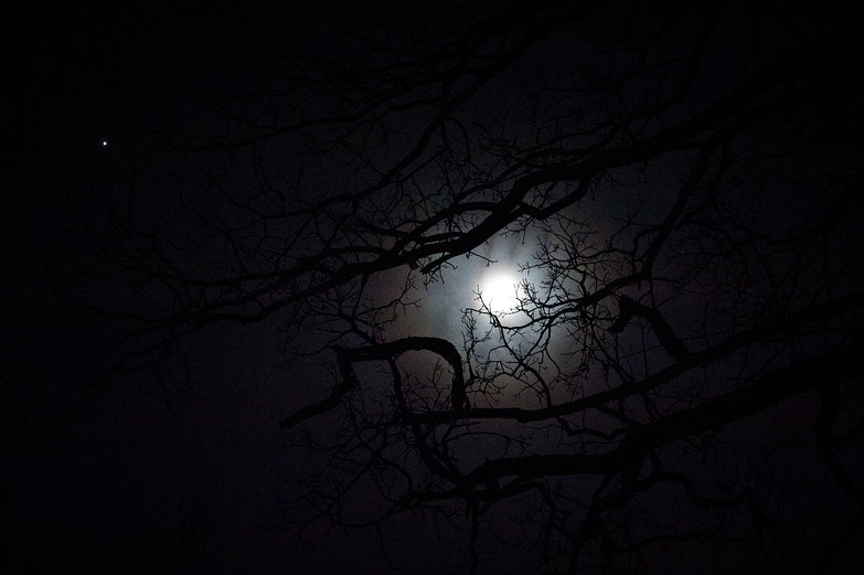 Jupiter & Moon Behind Bare Tree