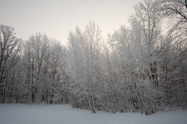 Frosty Morning Woods