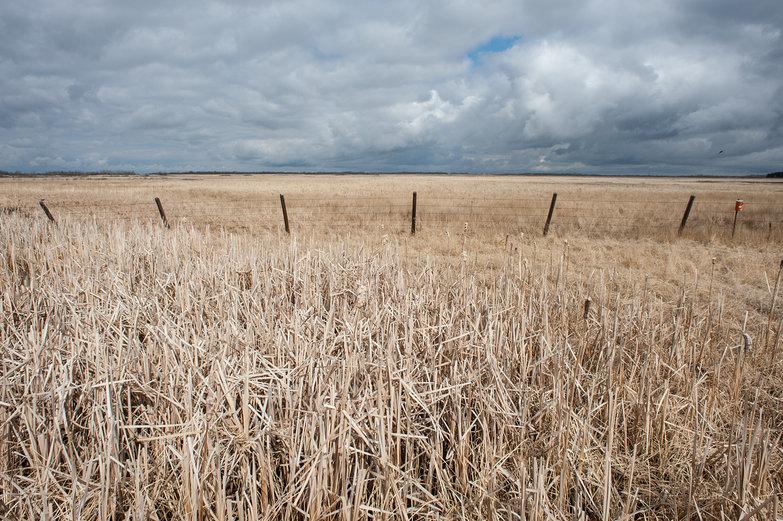 Saskatchewan Skies & Field