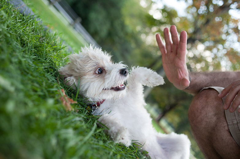 Pi, the Cutest Dog Ever
