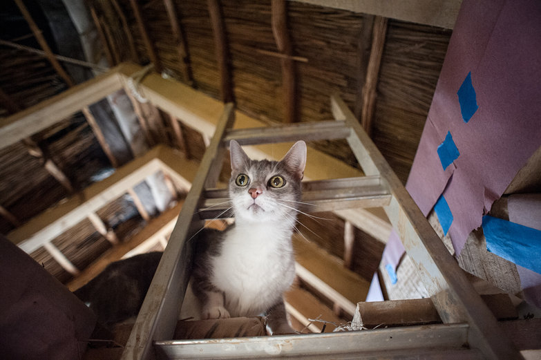 Kitty in Timber Frame Loft