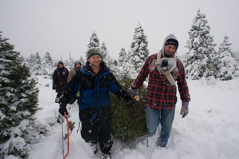 Dad and Paul Pulling the Christmas Tree