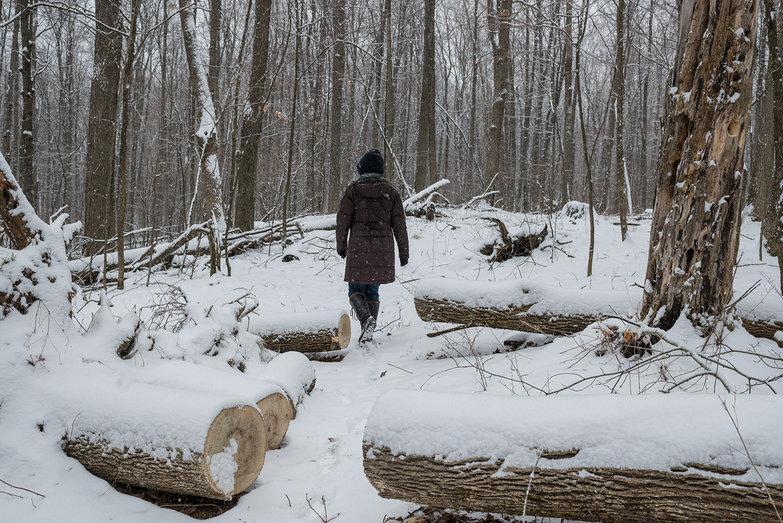 Tara Walking Through our Woods
