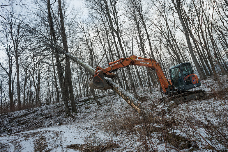 Excavator Picking up Tree