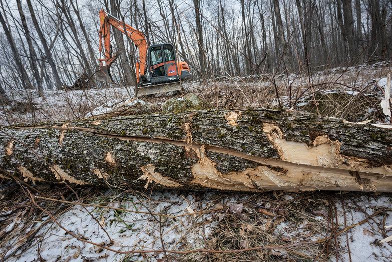 Excavator Scars on Tree