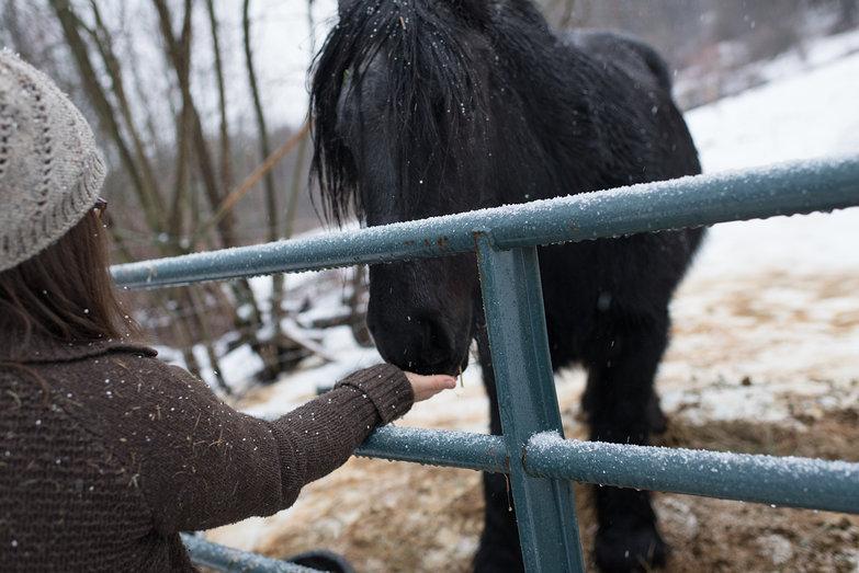 Jenna & Her Horse, Merlin