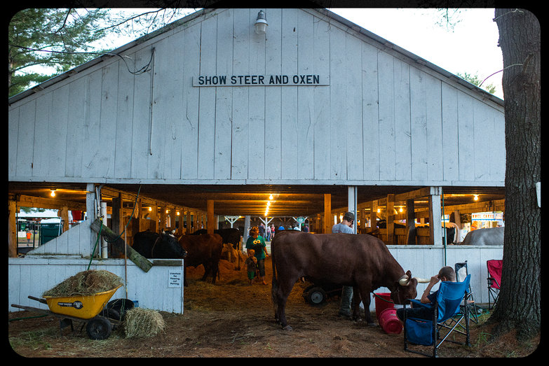 Ossipee Valley Fair Steer & Oxen Show
