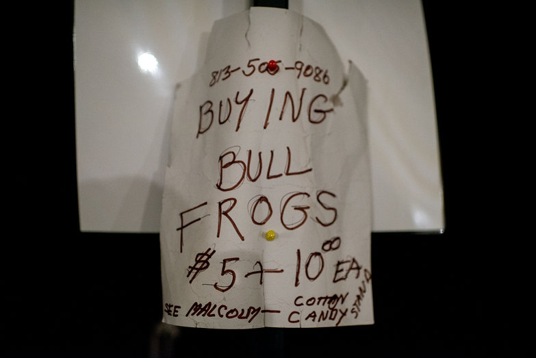 Buying Bullfrogs - See Malcom at the Cotton Candy Stand