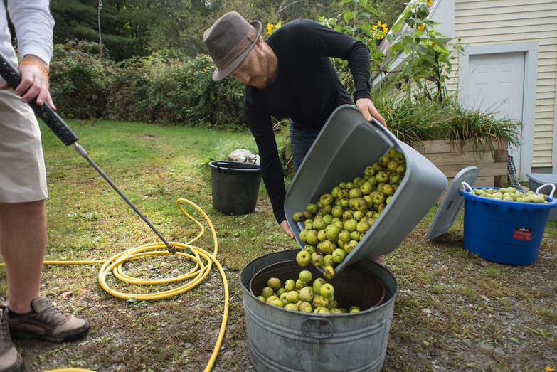 Tyler Cleaning Apples for Cider Pressing