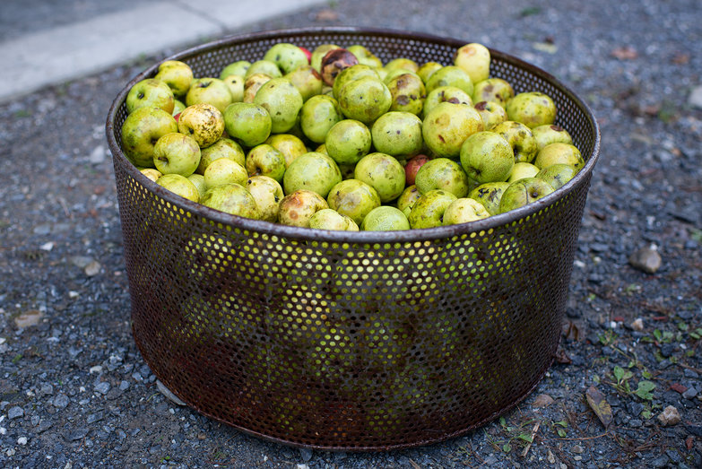 Cider Apples Ready for Power-Washing