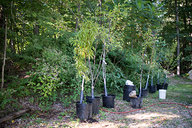 Fruit Trees Ready to Plant